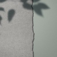 Home Learning – Shadows