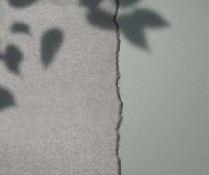 shadows plant