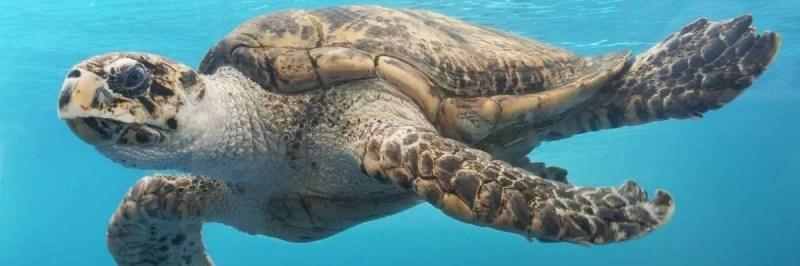 turtle e