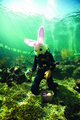 Easter Weekend to get underway with Seaquarium's BunnyPalooza