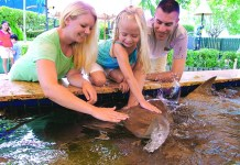 It's 'Season of Smiles' at Miami Seaquarium