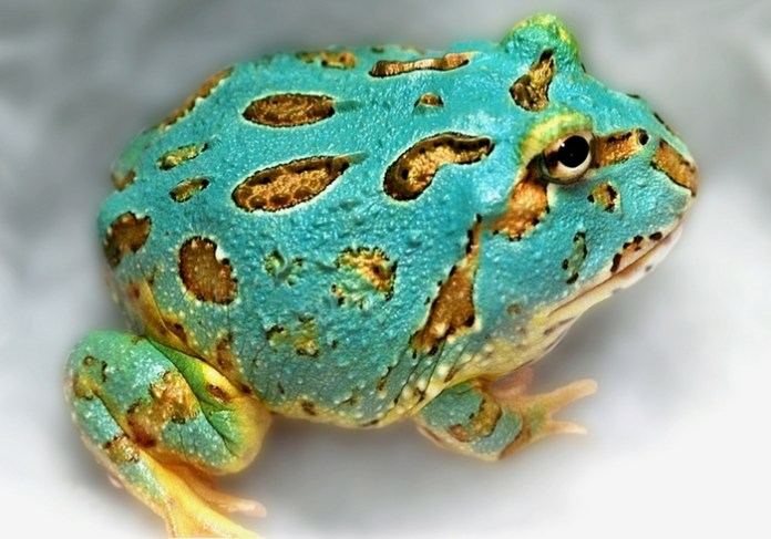 Cool down with cold-blooded critters at Repticon Miami