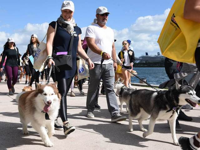 Take time Mar. 3 to 'paws' and Walk for the Animals