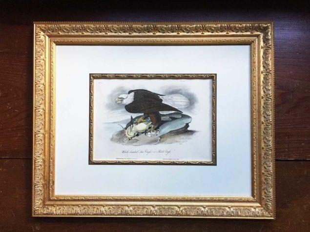 Audubon First Edition Royal Octavo print exhibit/sale through Dec. 10
