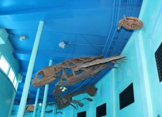Seaquarium's prehistoric exhibit returns with new sea monsters