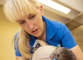 Zoo Miami announces the hatching of first ever kiwi
