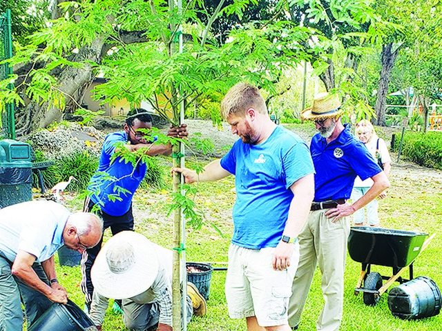 South Miami Rotary and Garden Clubs team up for Arbor Day