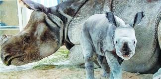 Rhino birth at Zoo Miami historic first in preserving rare species