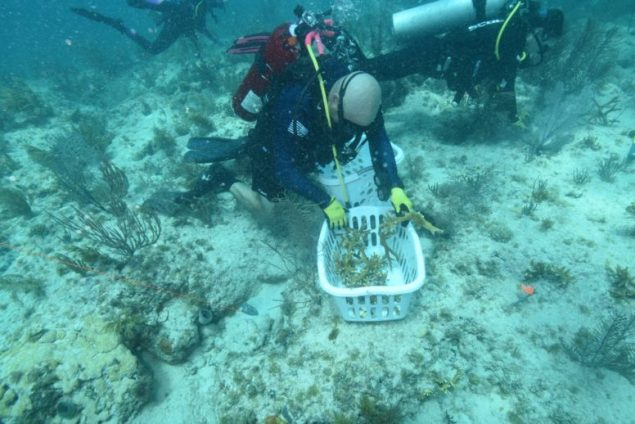 SB Host Committee project: 100 corals for 100 seasons