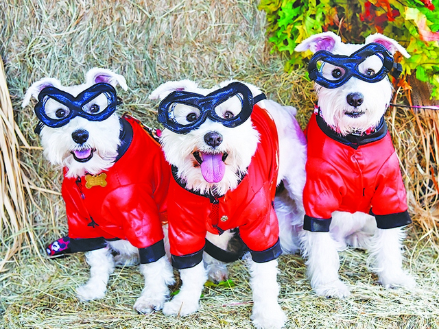 Howl-O-Ween and other Halloween Festivities at the Gardens