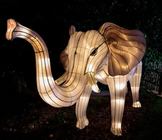 Zoo Miami dazzles with lights on selected nights during holidays
