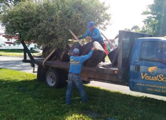Town plants 33 trees with help of Neat Streets Miami