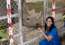 Endangered black rhinoceros celebrates milestone birthday