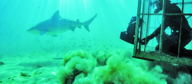 FIU scientists star in 5 new SharkFest shows on National Geographic