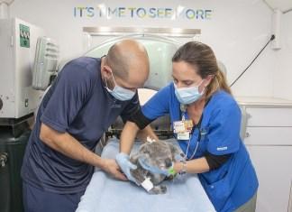 Zoo Miami's aardvark and koala undergo CT scans