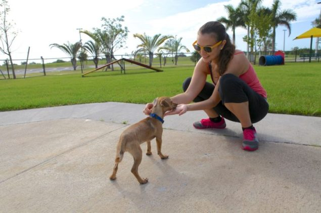 Your furry friends are welcome to return to appropriate dog parks.