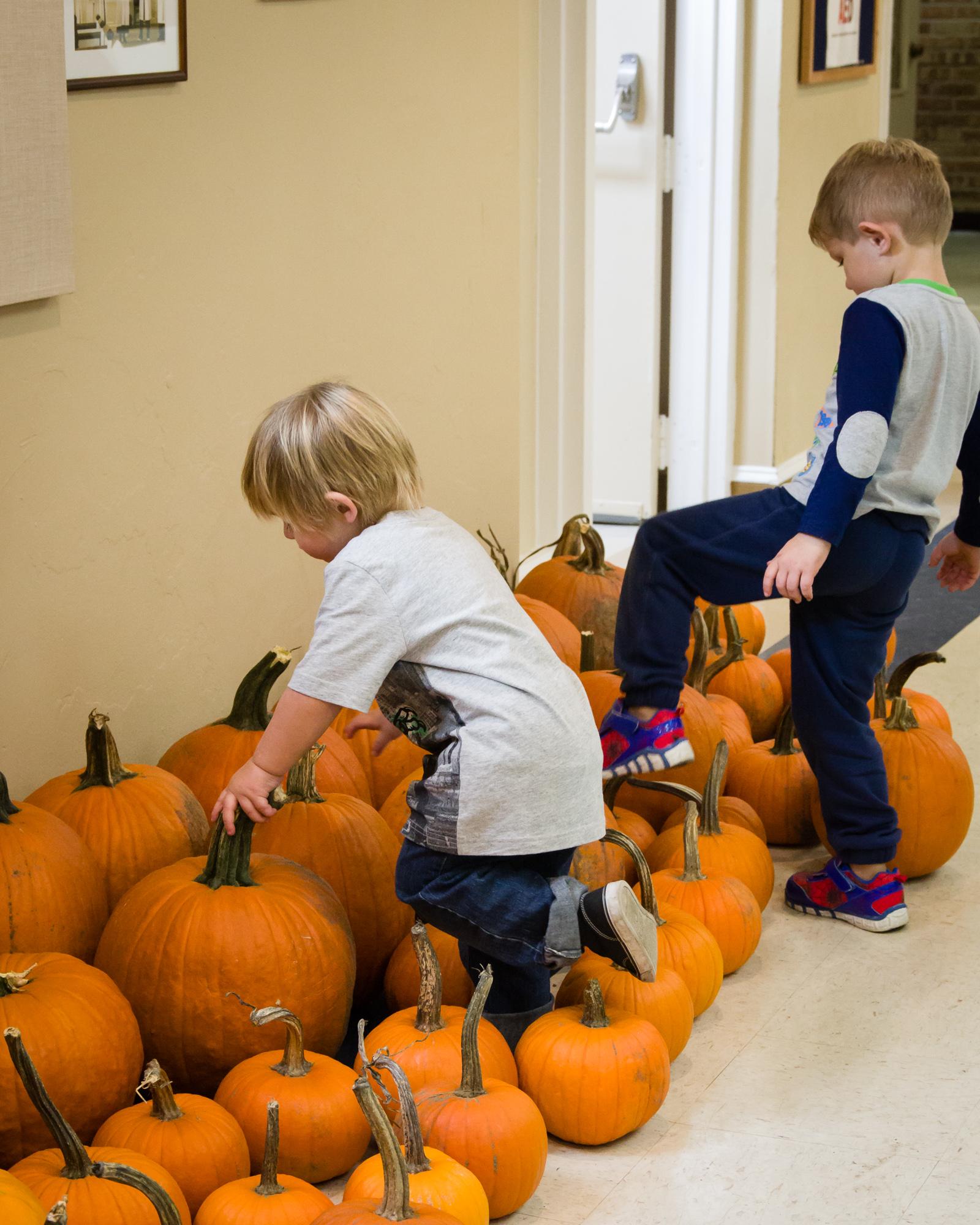 Knee-deep in pumpkins