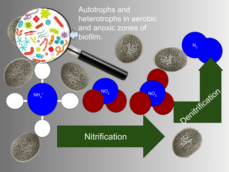 infographic of nitrification and denitrification in wastewater