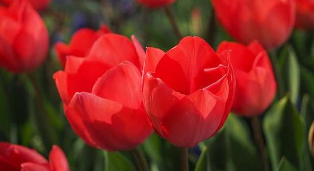 Flores Archives - Como Plantar