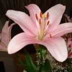 Aprende a cultivar tus flores