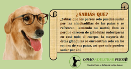 Lo que no sabias de tu perro
