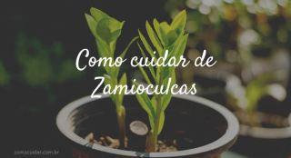 Como cuidar de Zamioculcas zamiifolia