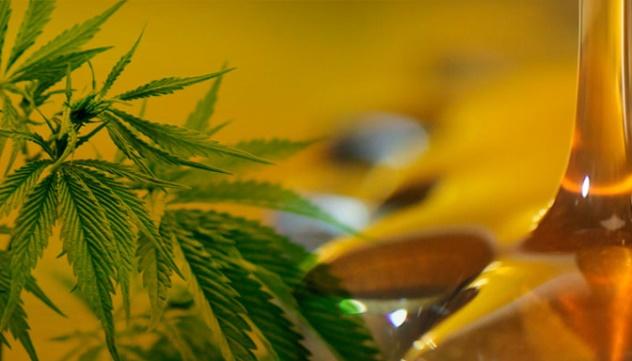 Cmo hacer macerado de cannabis en Aceite de Oliva  CmoCultivocom