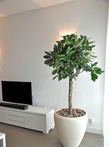 Adorna tu casa con plantas decorativas para interiores