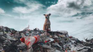 Como descartar cartões plásticos