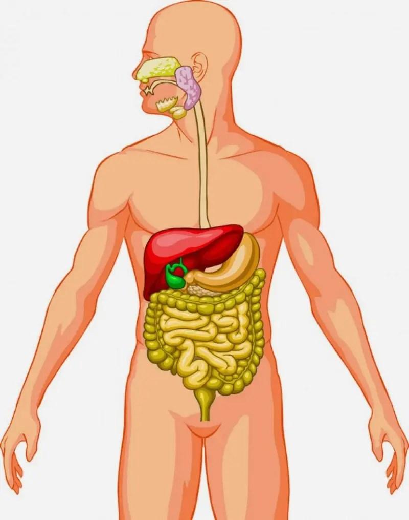 Cuerpo humano. - Mapa Mental - Amostra