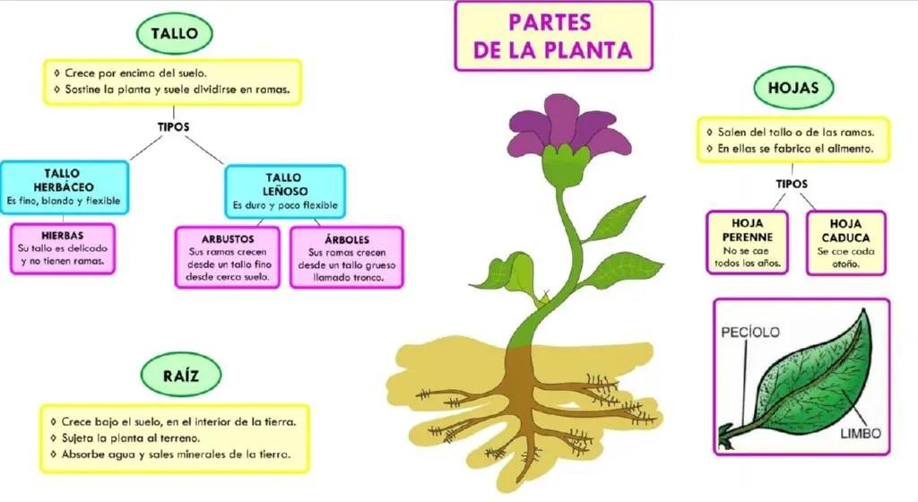 Las 3 funciones principales de las plantas for Funcion de las plantas ornamentales