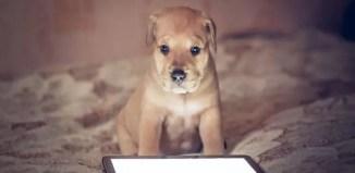 tecnologia para animales