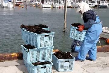como funciona el cultivo de algas