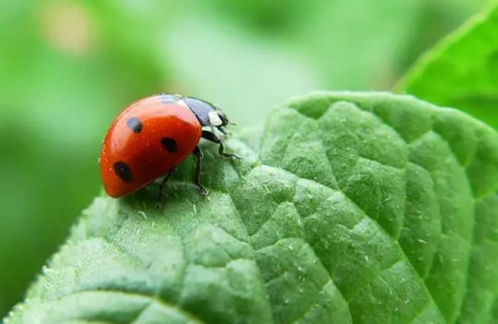 como funcionan los insecticidas organicos