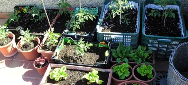 C mo sembrar vegetales en casa c mo lo puedo hacer for Cultivar vegetales en casa