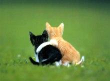 Cómo cuidar a tu mejor amigo 1