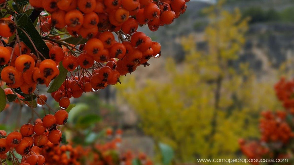 flora-rio-jucar-cuenca