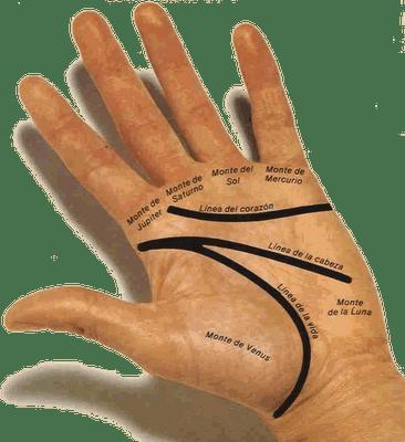 Como se lee la mano