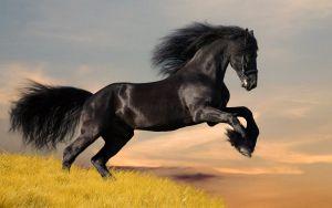 caballo caracteristicas