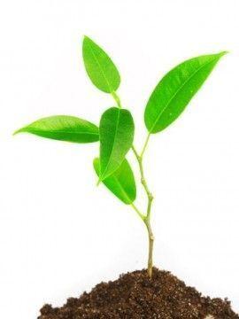 Reino de las plantas caracteristicas