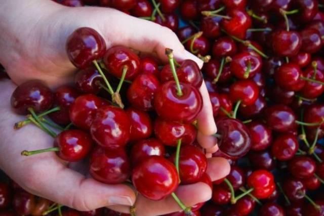 Las cerezas pueden solucionar problemas de hipertensión