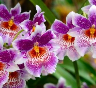 Como Tratar de Orquídeas Com Doenças