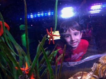 Munique Crianca SeaLife Parque Olimpico Alemanha Viagem - Foto Nathalia Molina @ComoViaja (2) (800x600)