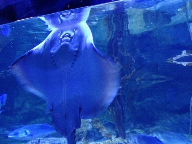 SeaLife AquaDom Berlim, Aquario Alemanha Viagem - Foto Nathalia Molina @ComoViaja (15) (950x713)
