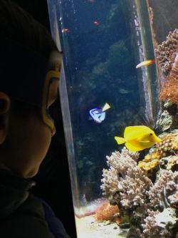 SeaLife AquaDom Berlim, Aquario Alemanha Viagem - Foto Nathalia Molina @ComoViaja (26) (675x900)