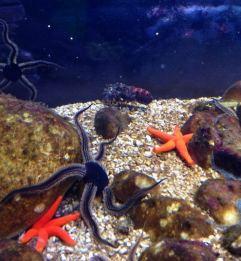 SeaLife Munique Aquario Alemanha Viagem - Foto Nathalia Molina @ComoViaja (24)