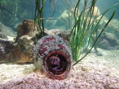 SeaLife Munique Aquario Alemanha Viagem - Foto Nathalia Molina @ComoViaja (3)