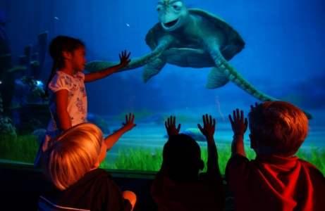Turtle Talk With Crush, Disney Hollywood Studios, Parques, Orlando - Foto Diana Zalucky, Disney, Divulgacao (1024x667)