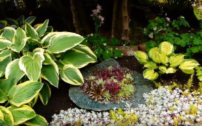 Anne & Bill's Garden