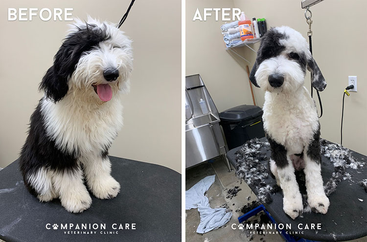 Overland Park Dog Grooming